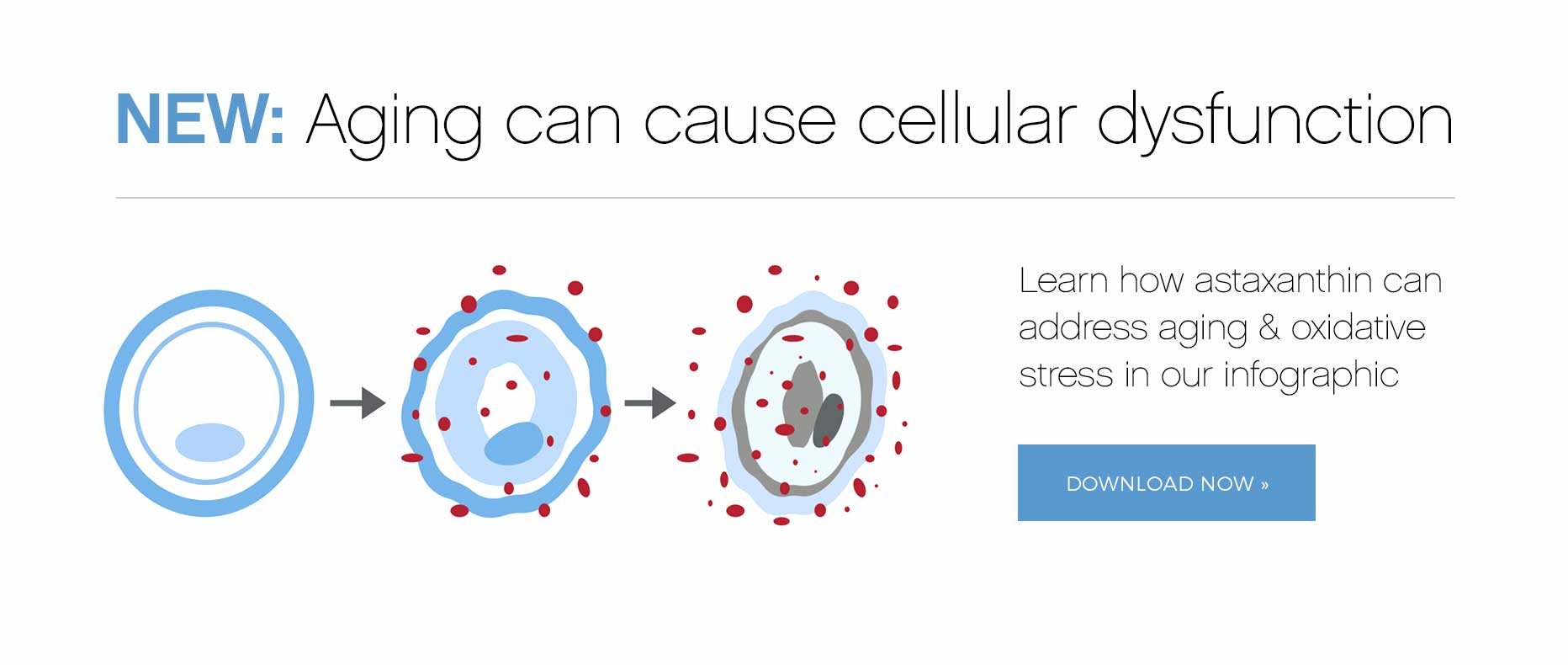 View our Aging can cause cellular dysfunction infographic